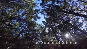 The Sound of Silence Cover- 18 String Harp Guitar